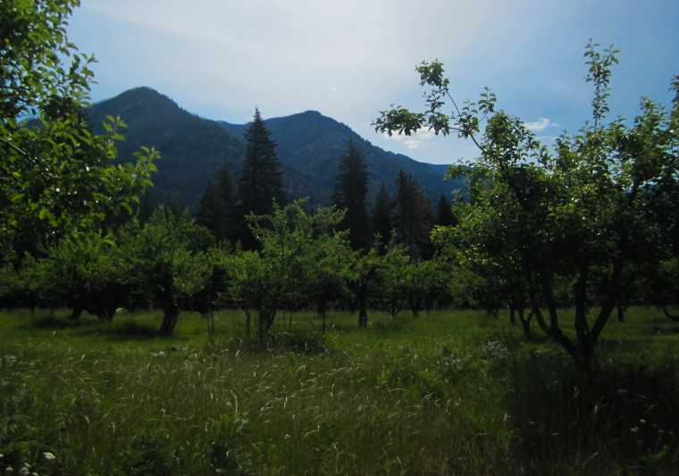 stehekin (1 of 1)-13