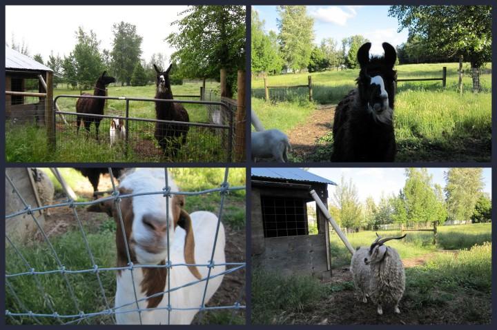 Blog photos3